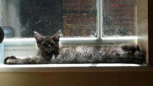 Monty windowsill